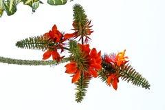 blommor arbeta i trädgården thailand Royaltyfri Foto