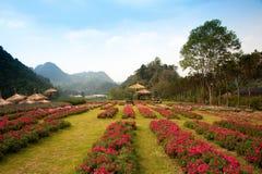 blommor arbeta i trädgården utomhus- Royaltyfri Bild
