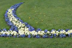 blommor arbeta i trädgården violets Arkivfoto