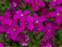 blommor arbeta i tr?dg?rden pink fotografering för bildbyråer