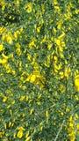 blommor arbeta i tr?dg?rden yellow Sk?nheten i natur arkivfoto