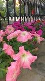 blommor arbeta i trädgården växter Arkivfoton