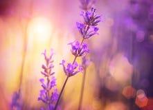 Blommor Art Design Royaltyfri Fotografi