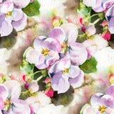 Blommor av äpplet Arkivfoton
