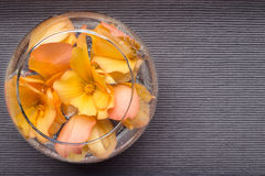 Blommor av begonian svävar i en kopp på texturerad bakgrund Lekmanna- lägenhet Arkivbild