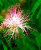 Blommor av buskar i blom royaltyfri foto