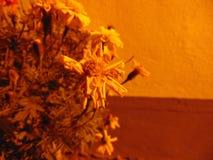 Blommor av Cesky Krumlov vid natt Royaltyfri Fotografi
