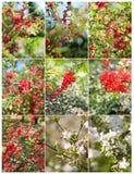 Blommor av de körsbärsröda blomningarna på en vårdag Blommar den blommande körsbäret för våren filialer Blommande vårfilialer arkivfoto
