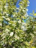 Blommor av den nya våren royaltyfri bild