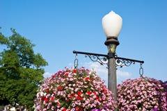 Blommor av en gata Pole Royaltyfria Foton