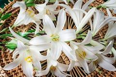 Blommor av ett slut för vit lilja upp Arkivfoto