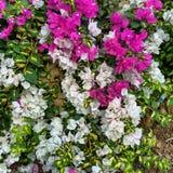 Blommor av färgglat Arkivbild