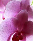 blommor av förälskelse arkivbilder