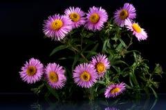 Blommor av fantastisk skönhet för djurliv royaltyfri fotografi