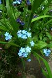 Blommor av fjädrar Royaltyfri Bild