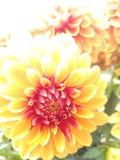 Blommor av fjädrar arkivbilder