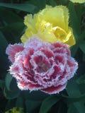 Blommor av fjädrar Arkivfoto