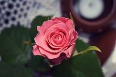 Blommor av kafét Lviv royaltyfri fotografi