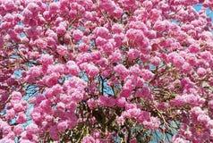 blommor av kalejdoskopet Royaltyfri Fotografi