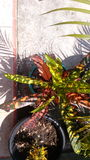 Blommor av liv Royaltyfri Foto