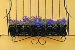 Blommor av Lobelia - i latinsk Lobelia Erinus - i krukan för bearbetad metall Arkivfoton