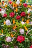Blommor av madeiraön, Funchal, Portugal arkivbilder