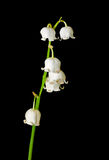Blommor av Maj lilja 1 Royaltyfria Bilder