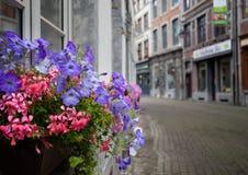 Blommor av Namur, Belgien Royaltyfri Foto