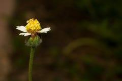 Blommor av ogräs Arkivfoto