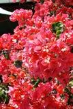 Blommor av outsäglig skönhet Fotografering för Bildbyråer