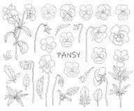 Blommor av pansies royaltyfri illustrationer