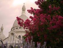 Blommor av Sacre Coeur, Montmartre Arkivbilder