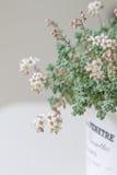 Blommor av Sedum, suckulenter Royaltyfri Fotografi