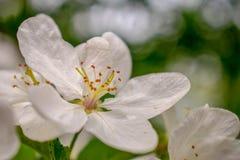 Blommor av servicebäret royaltyfri fotografi