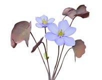 Blommor av tidig vår 49 Royaltyfri Bild