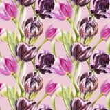 Blommor av tulpan Dragen botanisk illustration för vattenfärg hand av blommor seamless modell Royaltyfri Foto