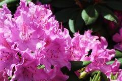 Blommor av under royaltyfri fotografi