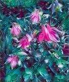 Blommor av uppsamlingsbass?ngen p? v?ren p? en s?ng i tr?dg?rden stock illustrationer