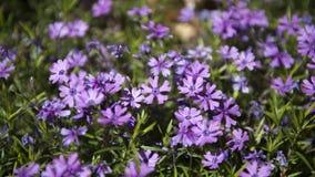 Blommor av vårsäsongen arkivfoton