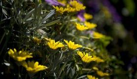 Blommor av vårsäsongen Arkivfoto