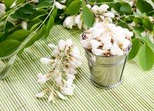 Blommor Bacopa Royaltyfria Foton