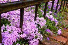 Blommor bak järnstaketet arkivbild
