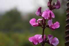 Blommor Bevattna tappar Royaltyfri Bild