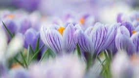 Blommor bland andra blommor Royaltyfria Bilder