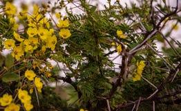 Blommor bland taggar royaltyfri foto
