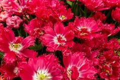 Blommor - blom- bakgrund för natur Arkivbilder