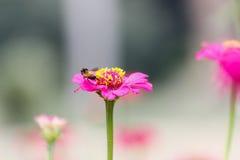 Blommor - blomma på bicloseupen Arkivbild