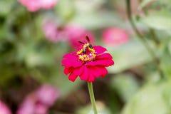 Blommor - blomma på bicloseupen Fotografering för Bildbyråer