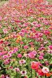 Blommor - blommafält Arkivfoto