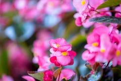 Blommor blommar i trädgården med suddig effekt för lins som förgrund och bakgrund royaltyfri foto